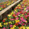 Primavera al Filo 005