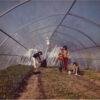 lavori nella serra aprile 1981